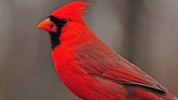 Science On Tap - March - Birding In Ohio