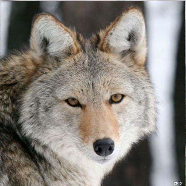 Wildlife Sanctuary Field Trip And Picnic Quot Colorado