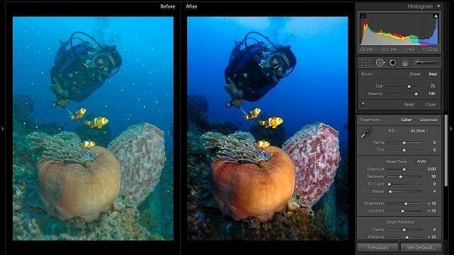 Underwater Photography Workshops in Toronto