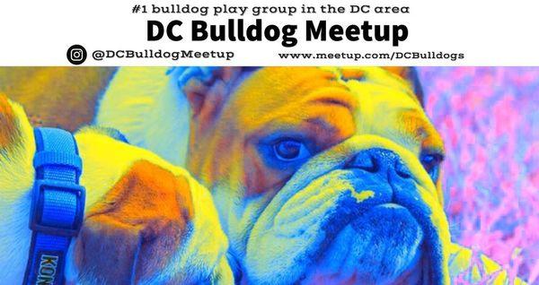 D C  Bulldog Meetup Group (Washington, DC) | Meetup