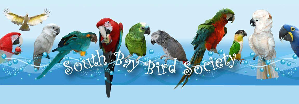 South Bay Bird Society
