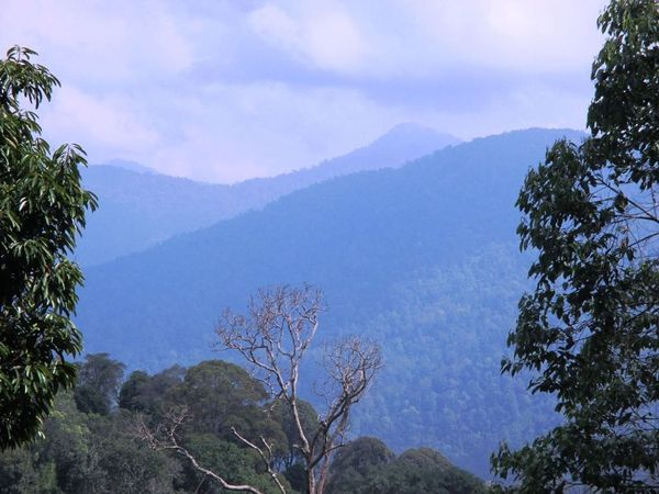 Image result for bukit chenuang hiking