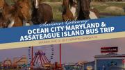 Photo for Summer Getaway - Ocean City Maryland & Assateague Island Bus Trip June 22 2019
