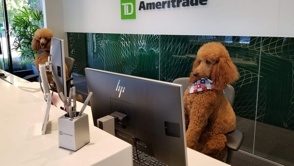 Traders Meetup   Traders helping traders