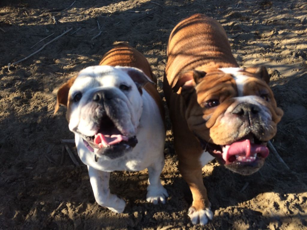 Lets Keep This Bulldog Party Going Meetup