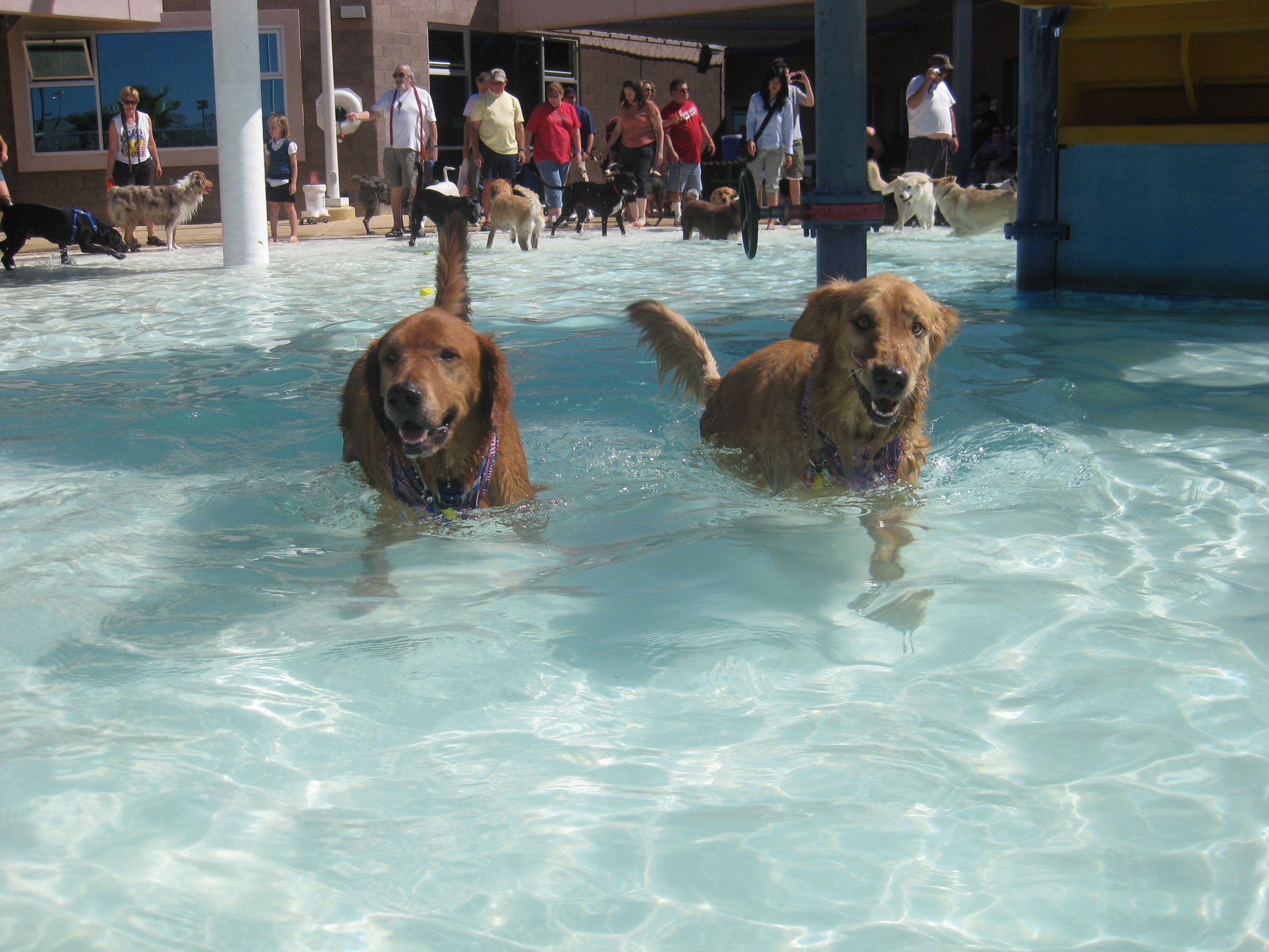 Las Vegas Medium/ Large Breed Dog Meetup and Friends