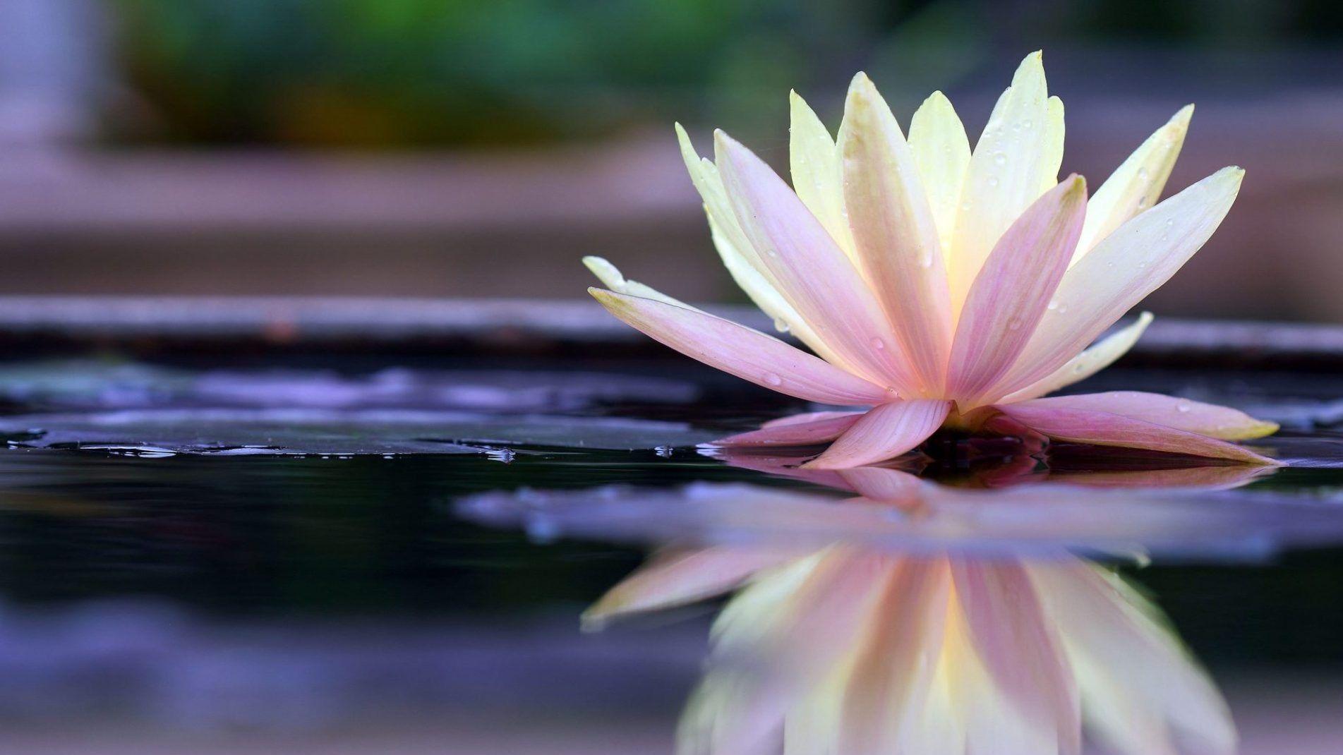 Chakra Bliss Center: Modern  Energy Medicine and Shamanism