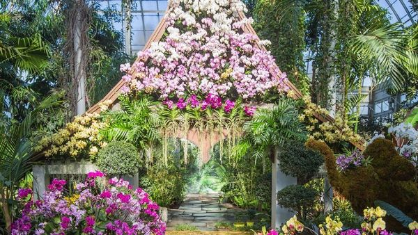 Orchid Show At The Botanical Gardens Meetup