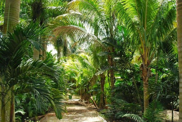 The Charms Of Palms The Best Palm Trees To Grow In Our