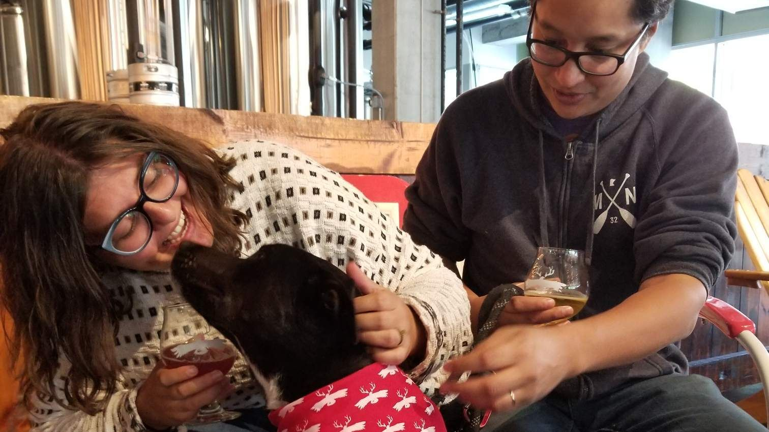 Dog Training with Get Real Dog Training