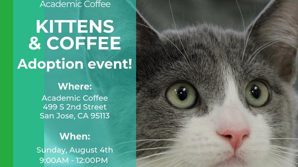 Photos - Silicon Valley Cat Lovers Meetup (San Jose, CA