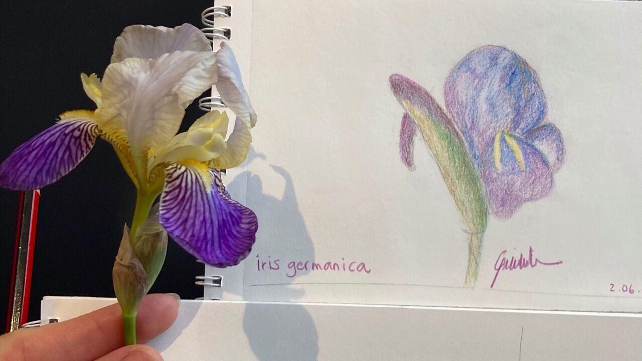 ???? Botanical Drawing in Kunsthaus ????