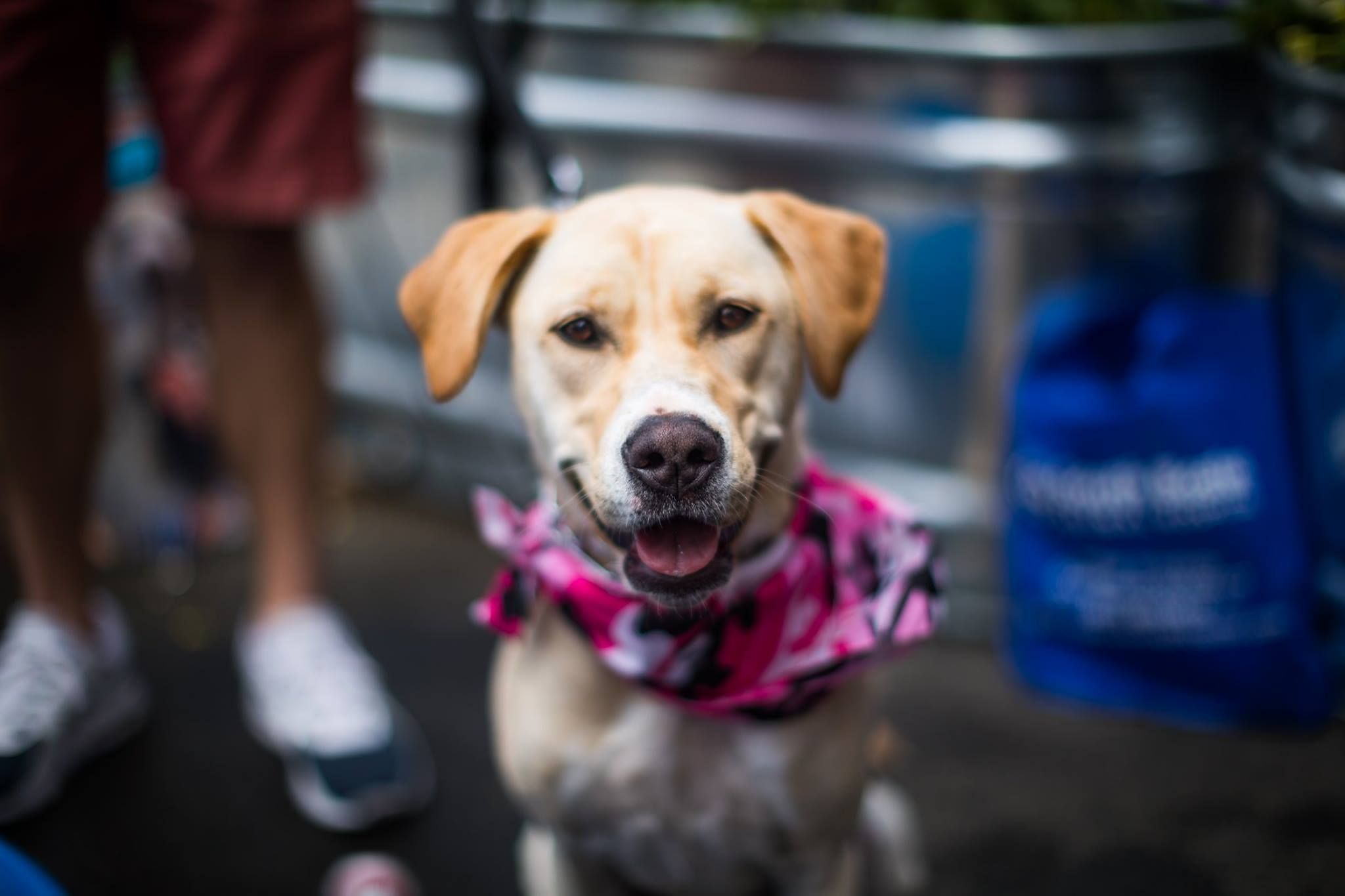 Photos - Boston BarkHappy Dog Meetup (Boston, MA) | Meetup