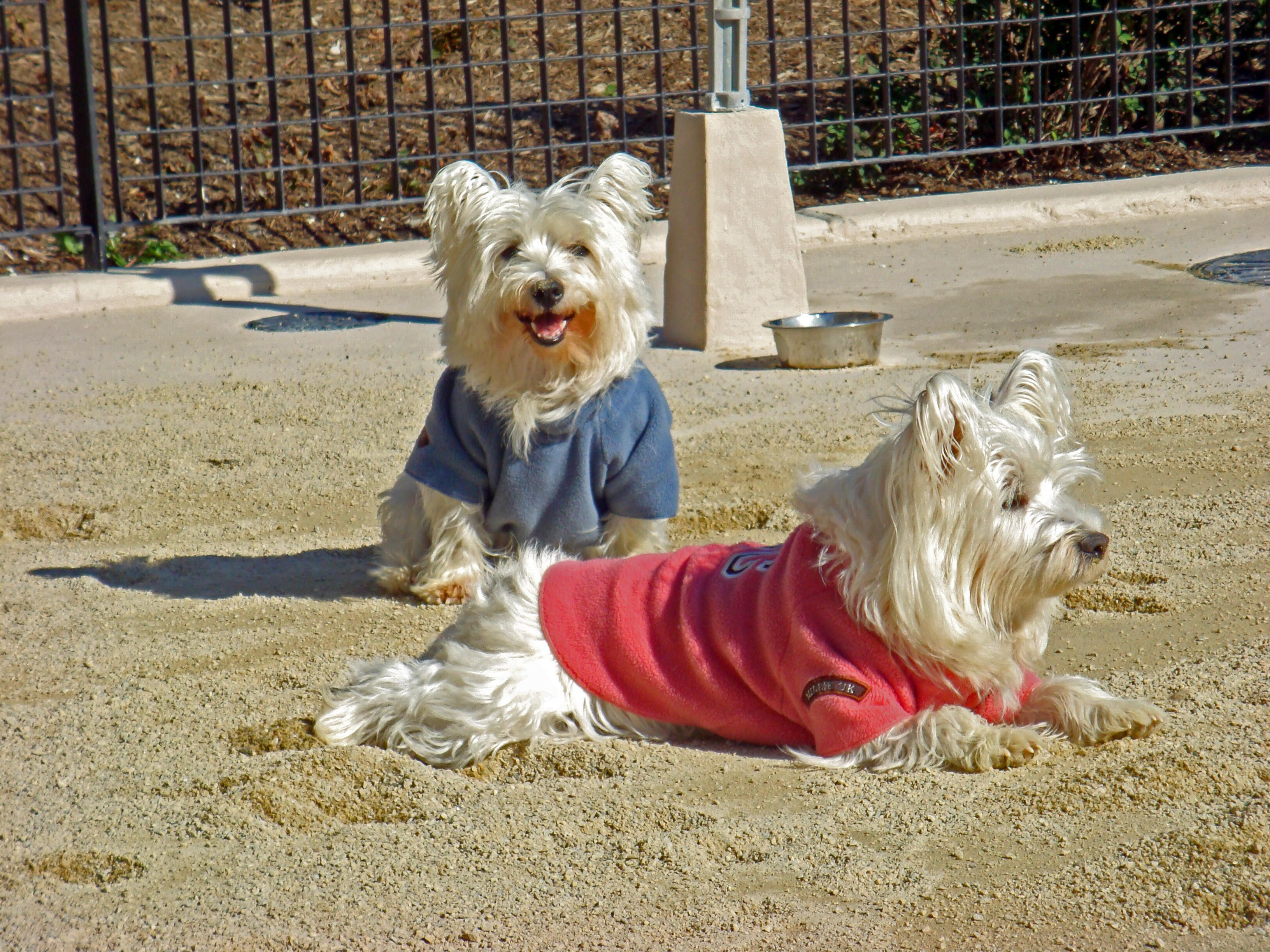 Surface Conditions: Daily Status Report - Westie Rescue NYC (WRNYC