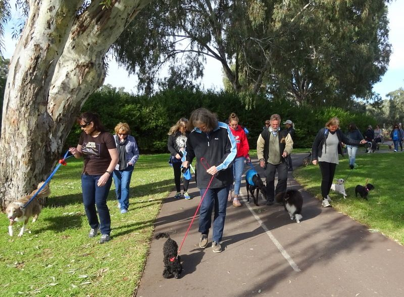 Pippin's Dog Walking Group - Adelaide