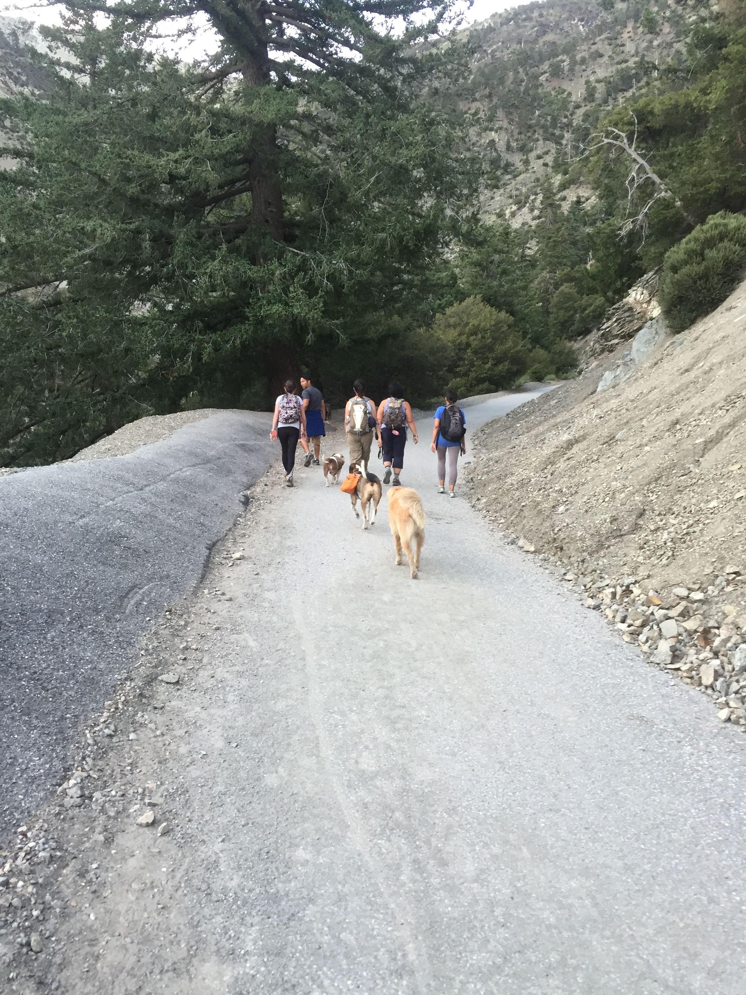 Hiking with Fido