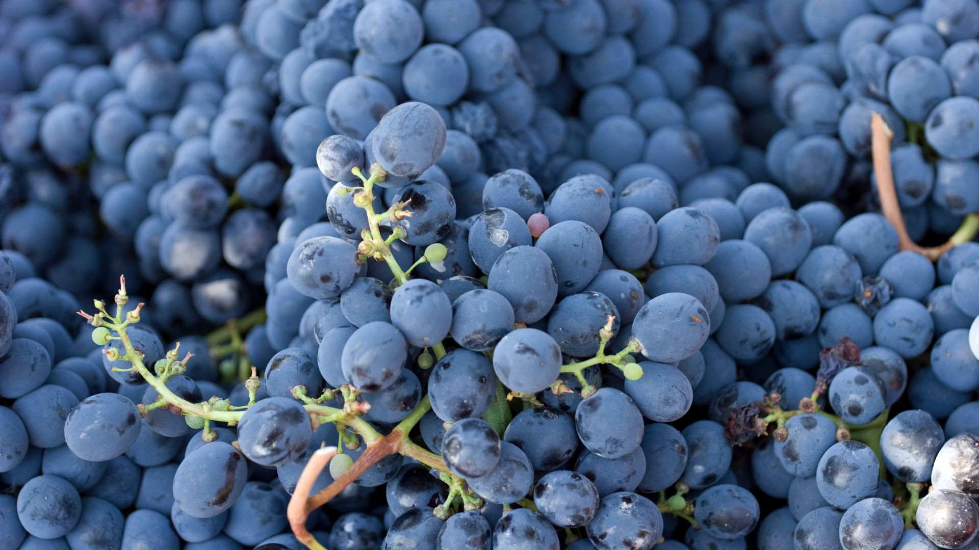Piedmont Wines Masterclass