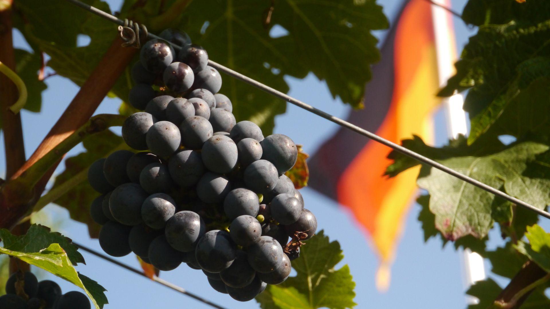 Baden - Baden Wines Masterclass