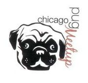 Breeder recommendations? - Chicago Pugs (Chicago, IL) | Meetup