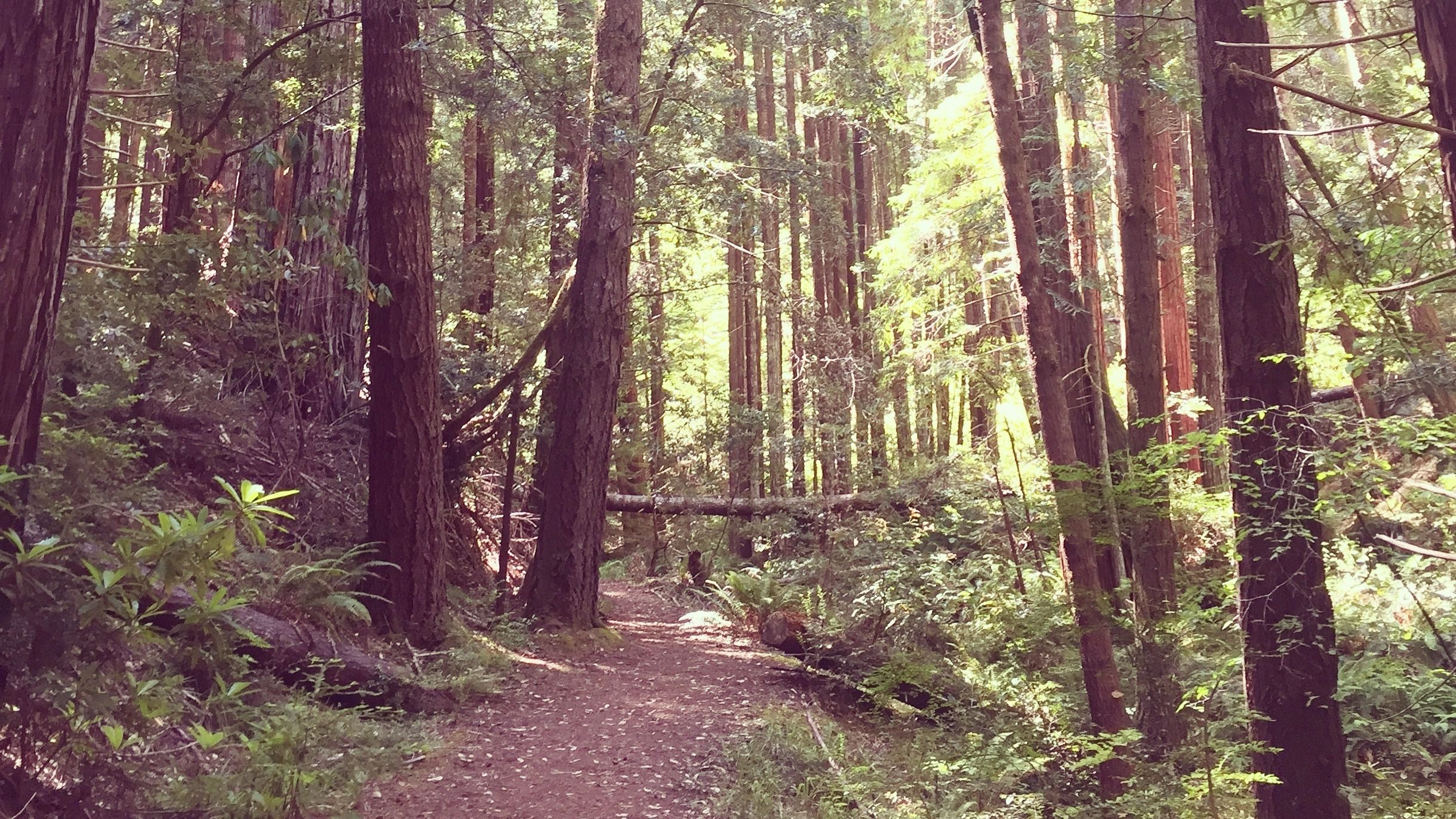 Fall In Love with Nature Hiking for Women (& Introverts)