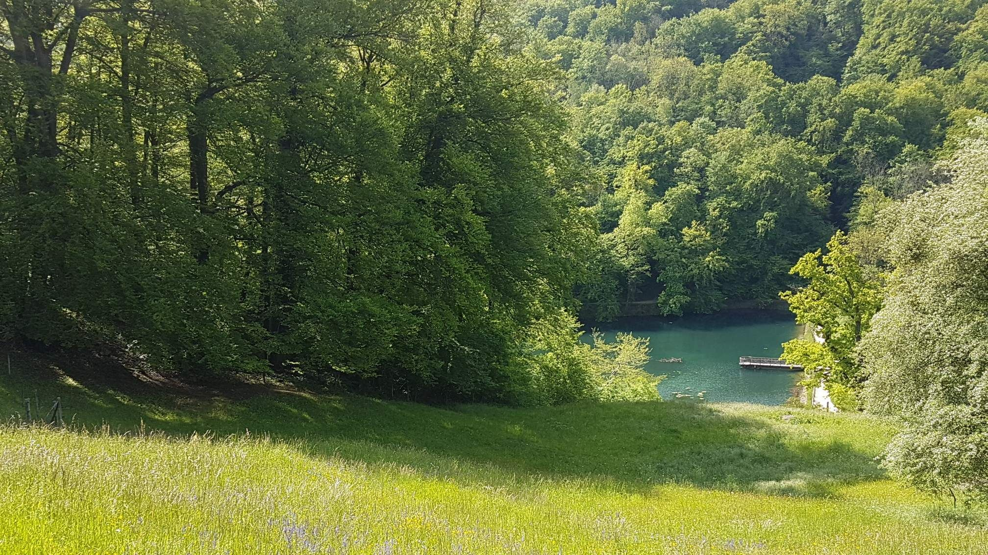 Zug Forest Bathing (Shinrin-yoku)