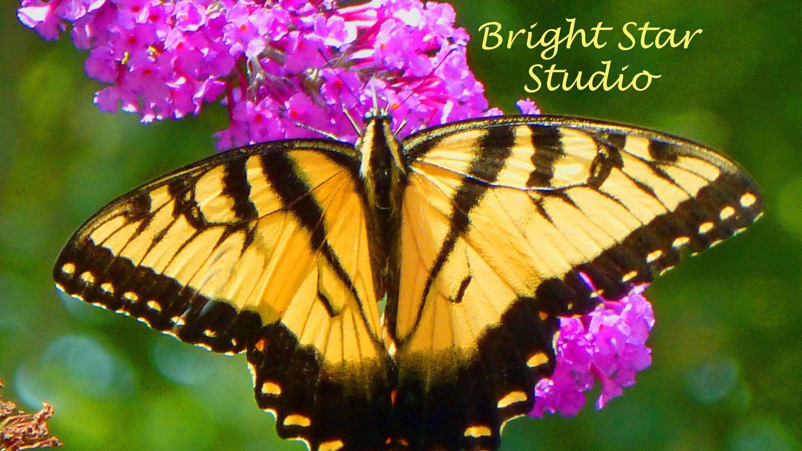 Bright Star Studio