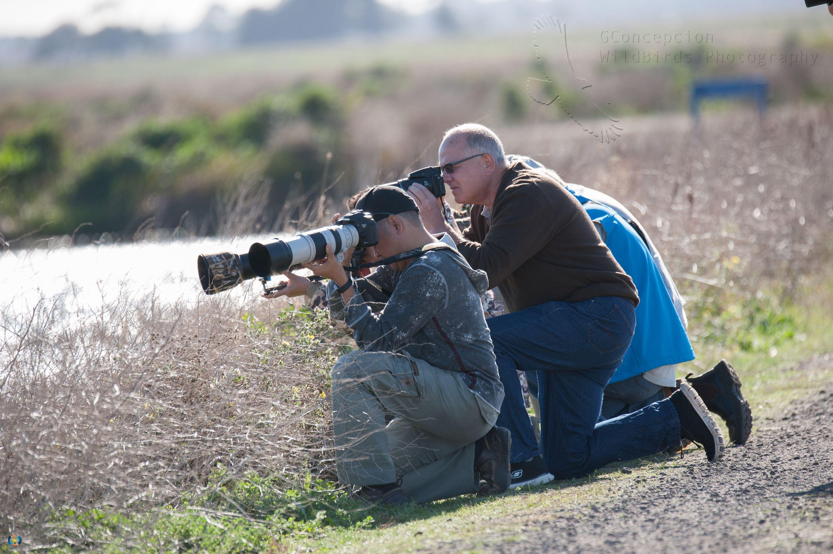 Melbourne Bird Photographers