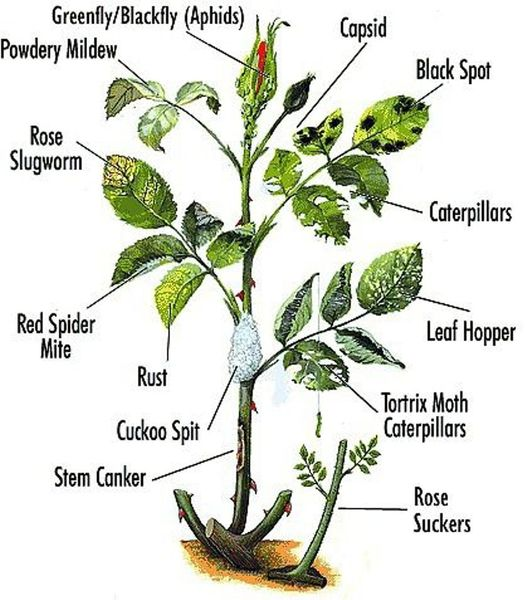 Summer Solutions For Pests Yard Work More: Simple Solutions For Problems Caused By Garden Pests And