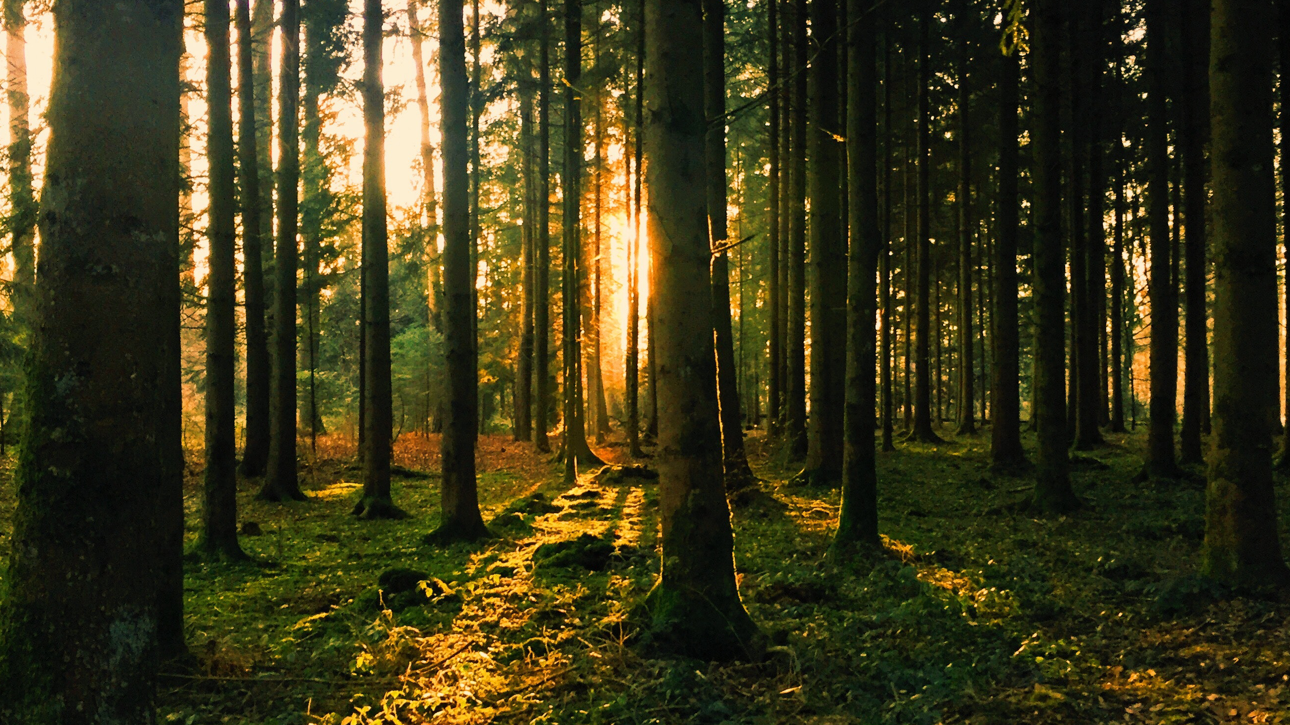 London Forest Bathing & Nature Connection Meetup