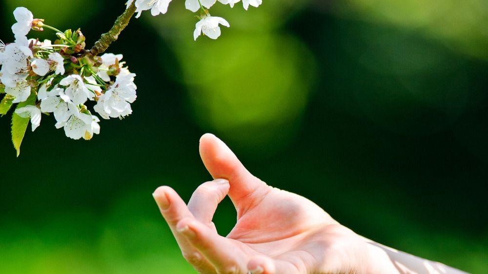 Yoga with Vaneeta - Yoga and Mediation Meetup