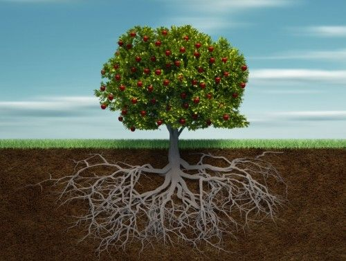 Systemic Family Constellations, Houston