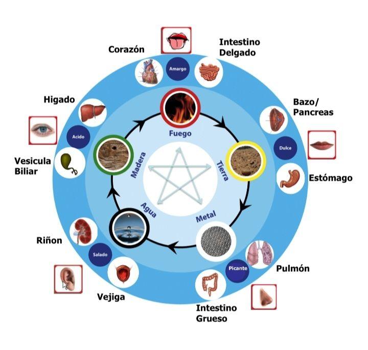 Fisioterapia , Acupuntura y Medicina Tradicional China
