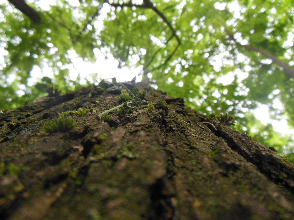 Giving Tree Essentials Ayurveda & Yoga Wellness