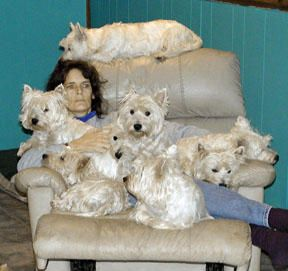 So Ya Wanna Get a Westie, eh? Where Do Westie Dogs Come From