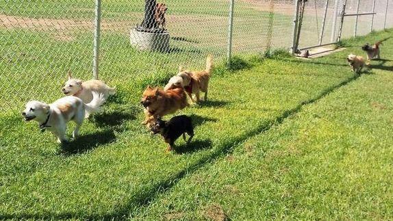 Tiny Paws Fresno - Small Dog Socialization Play Group
