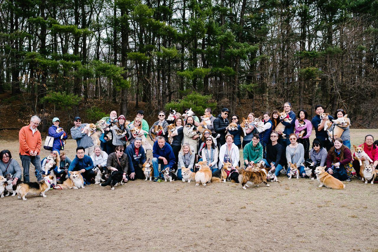 Boston Corgi Meetup