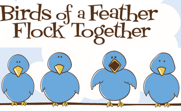 Image result for birds of a feather