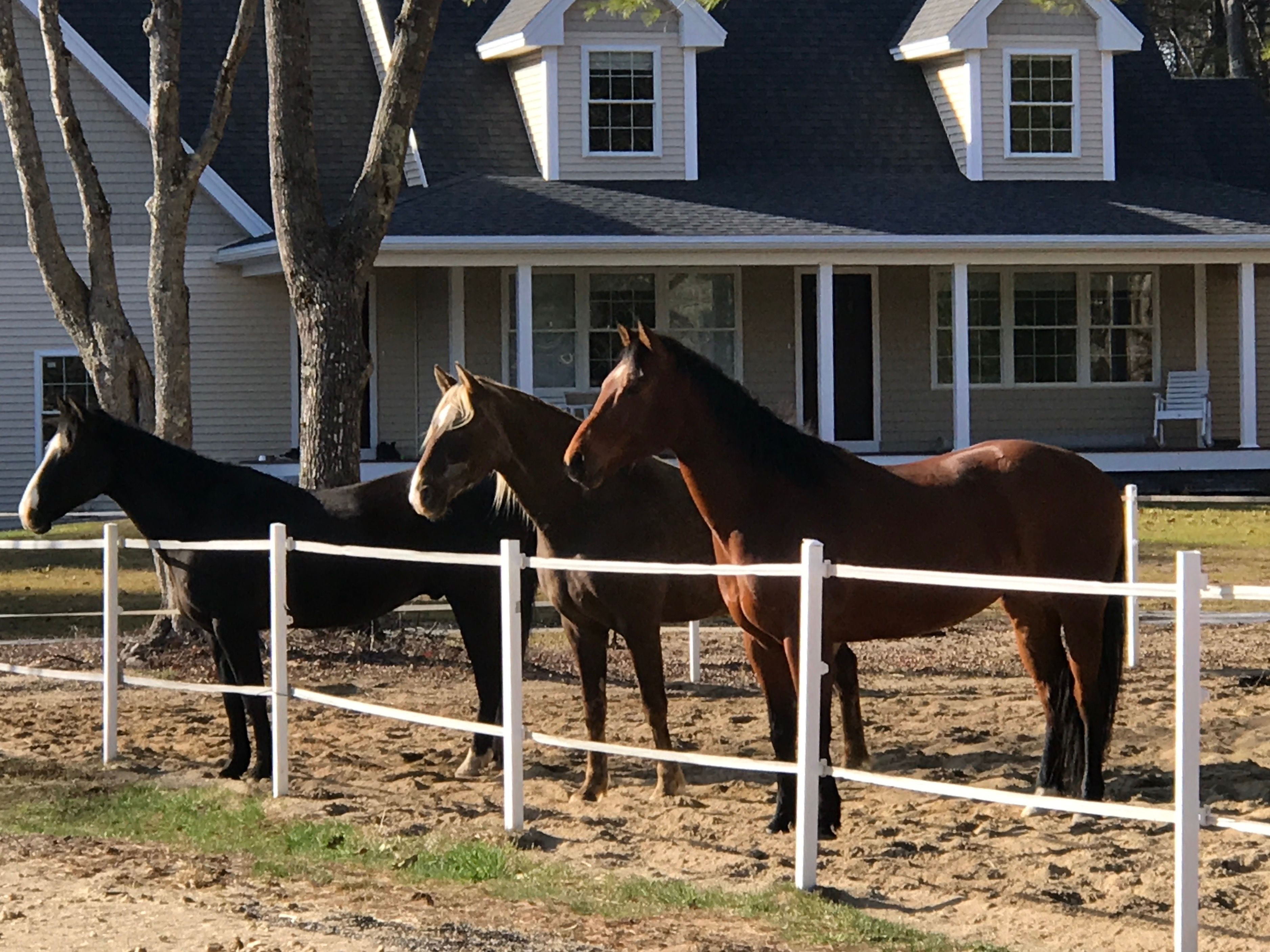 Meet and greet our horses monthly 24 oct 2018 meet and greet our horses monthly m4hsunfo