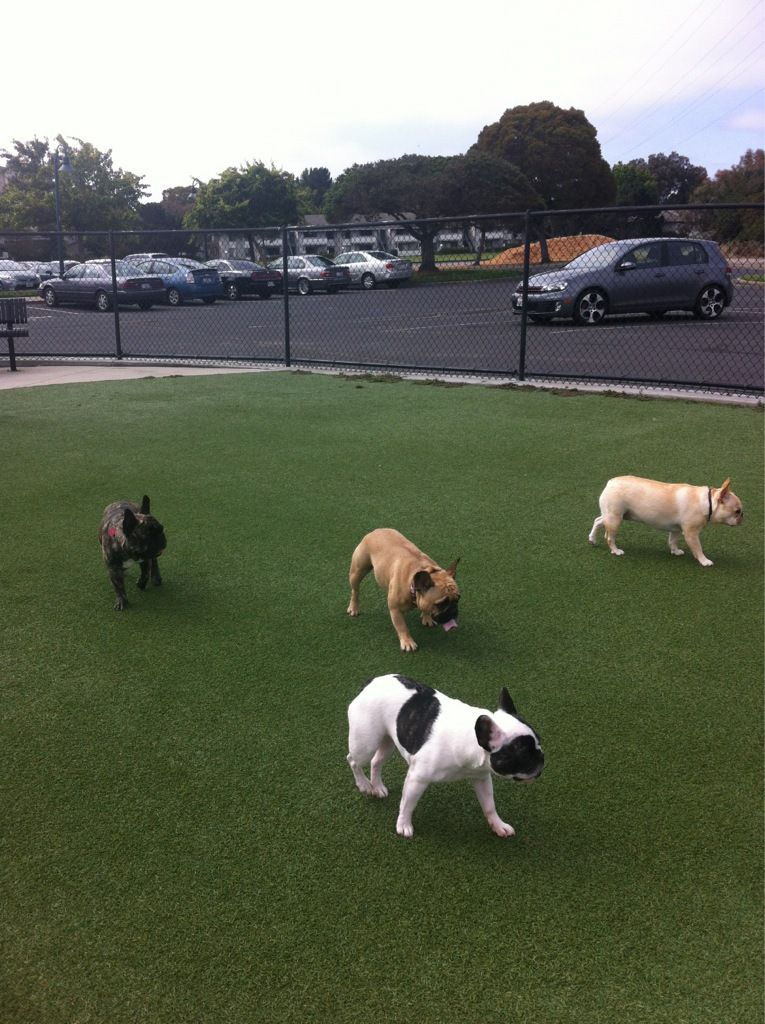 French Bulldogs on the Peninsula Meetup