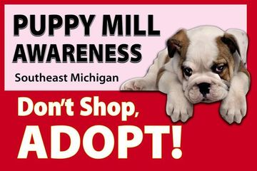 The Family Puppy/Family of Pets (Exposed) - Puppy Mill