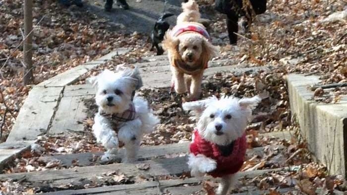 Mississauga GTA Small Dogs Outings