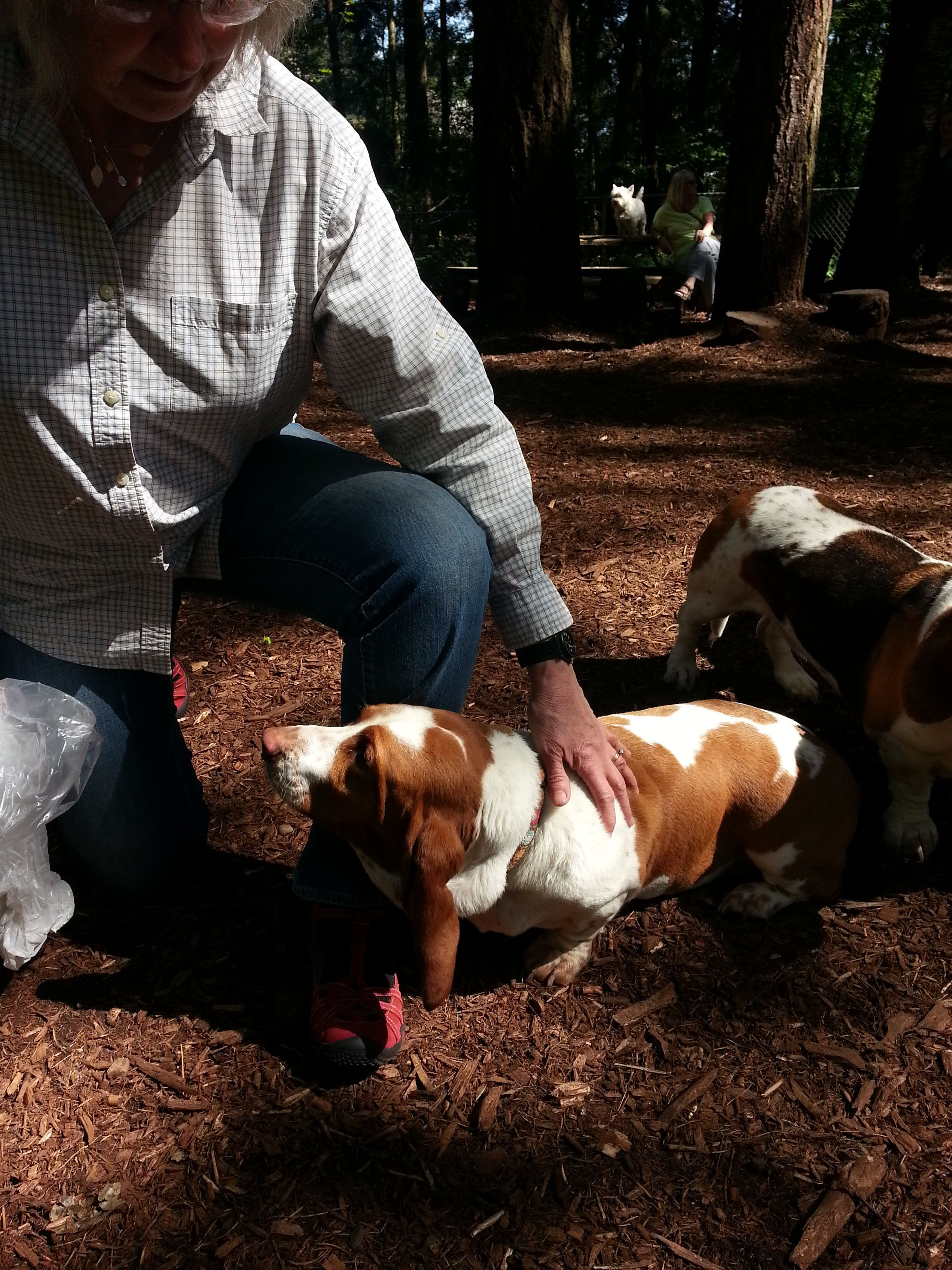 The Seattle Basset Hound Meetup Group