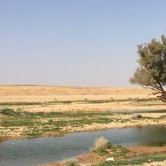Abdulaziz