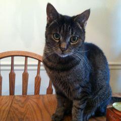Cat L.