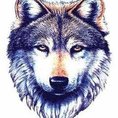 compwolf2