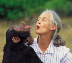 Jane Goodall F.