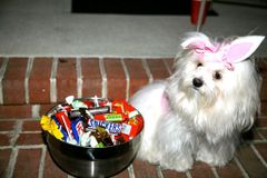 Havanese groups | Meetup