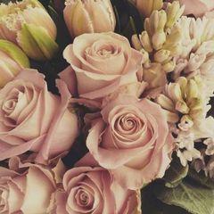 Rose E.