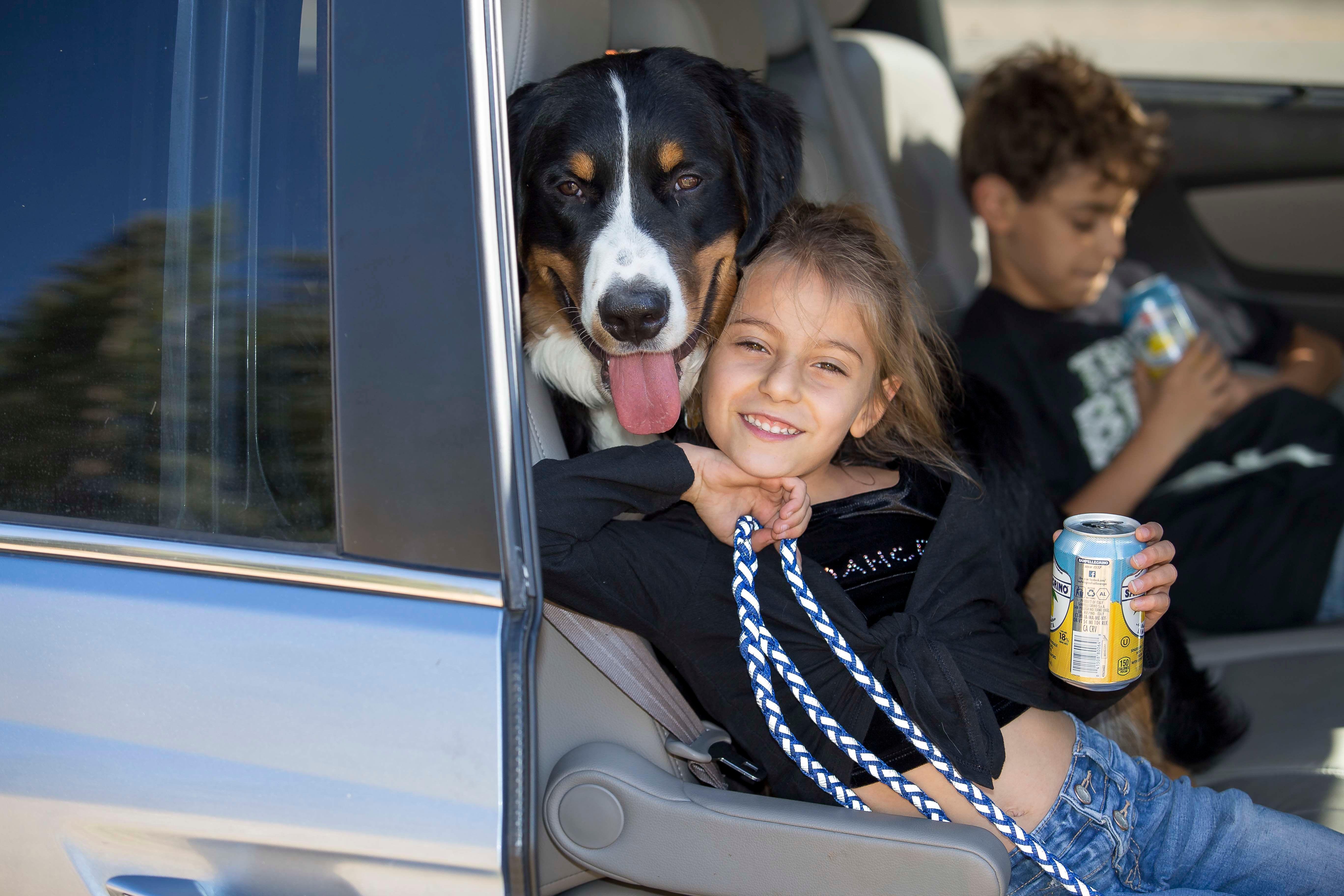 Elena - The Colorado Bernese Mountain Dog Meetup Group (Littleton