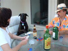 PokerDawg